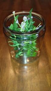 Butterfly in a Jar 2