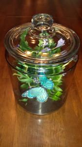 Butterfly in a Jar 3