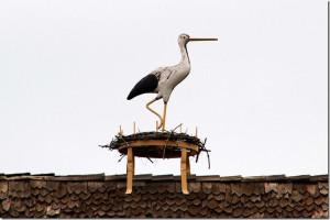 Solvang - rooftop storks