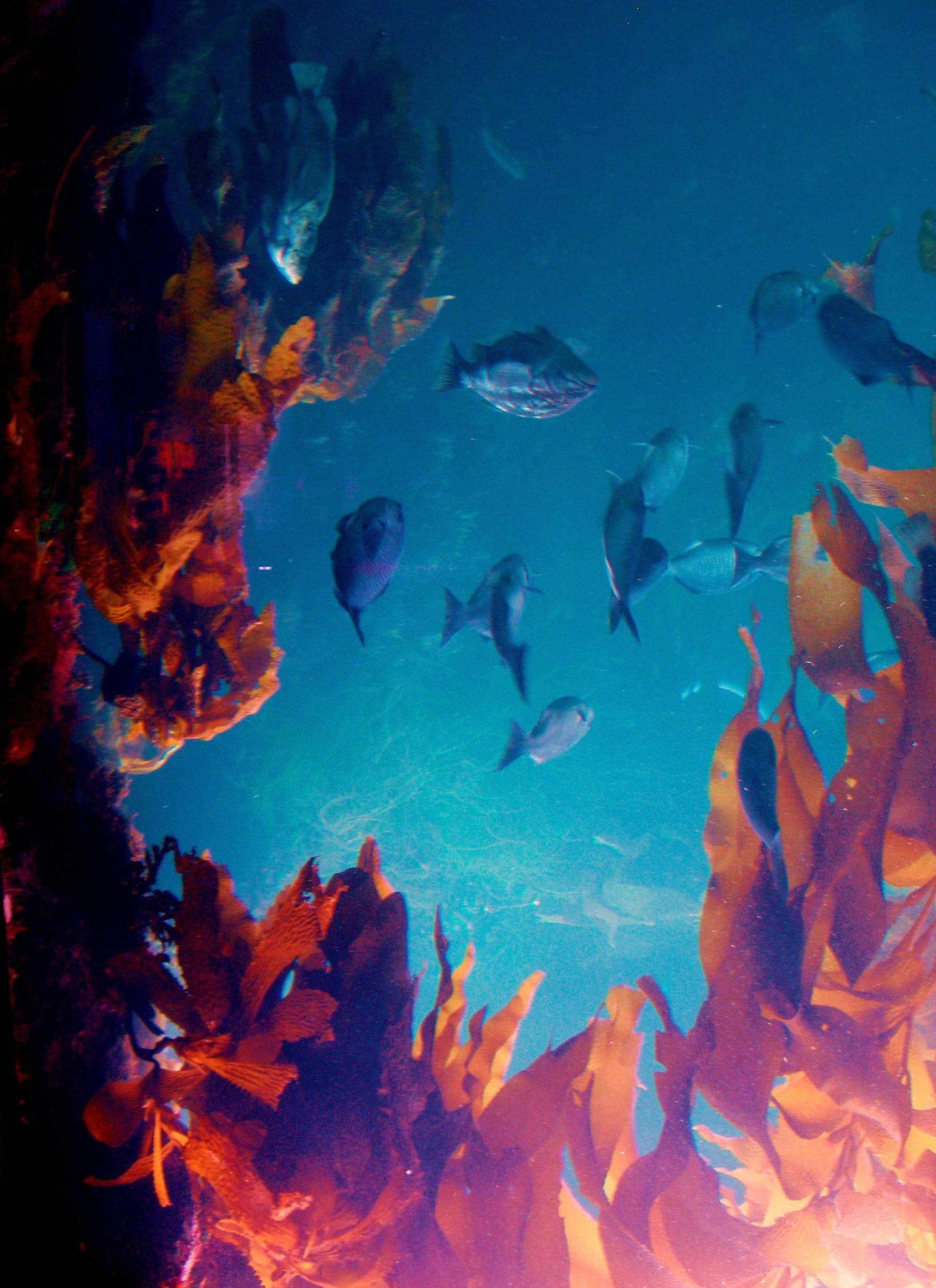 Monterey Bay Aquarium Trivia The Enchanted Manor