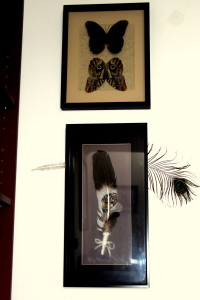 Library butterfly and painted feather