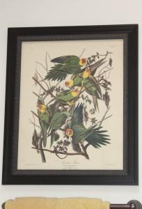 Wildlife prints 1