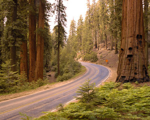 Sequoia National Park 2