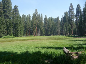 Sequoia National Park - Crescent Meadow