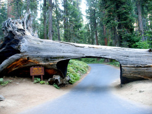 Sequoia National Park - tunnel log