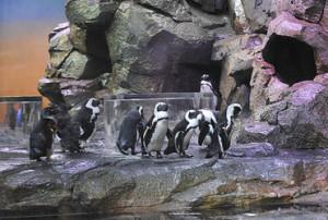 Travel Information For Visiting The Georgia Aquarium The