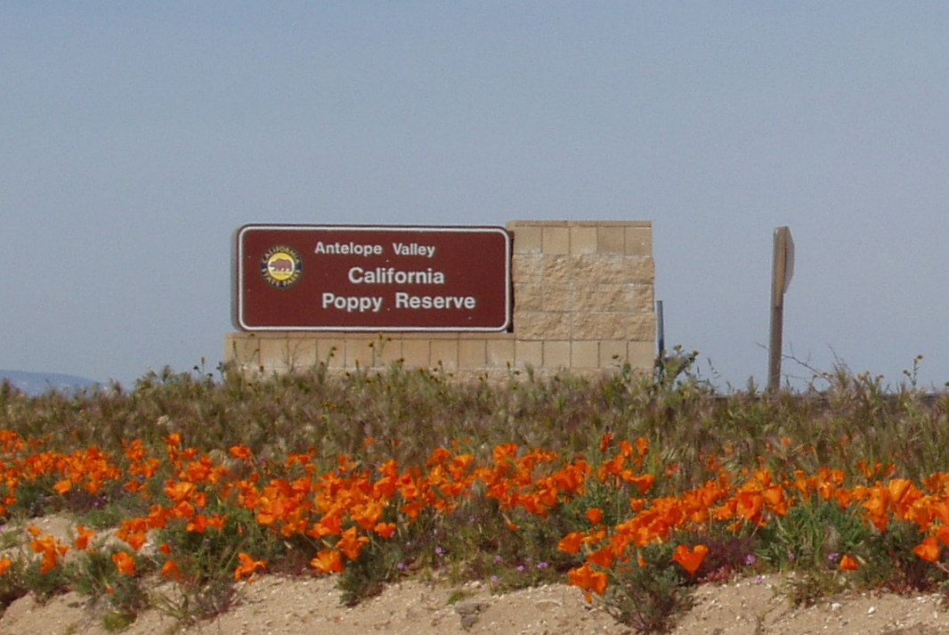 Antelope Valley California Poppy Reserve | The Enchanted Manor