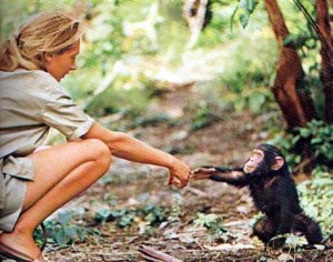 Image result for jane goodall and chimpanzees images