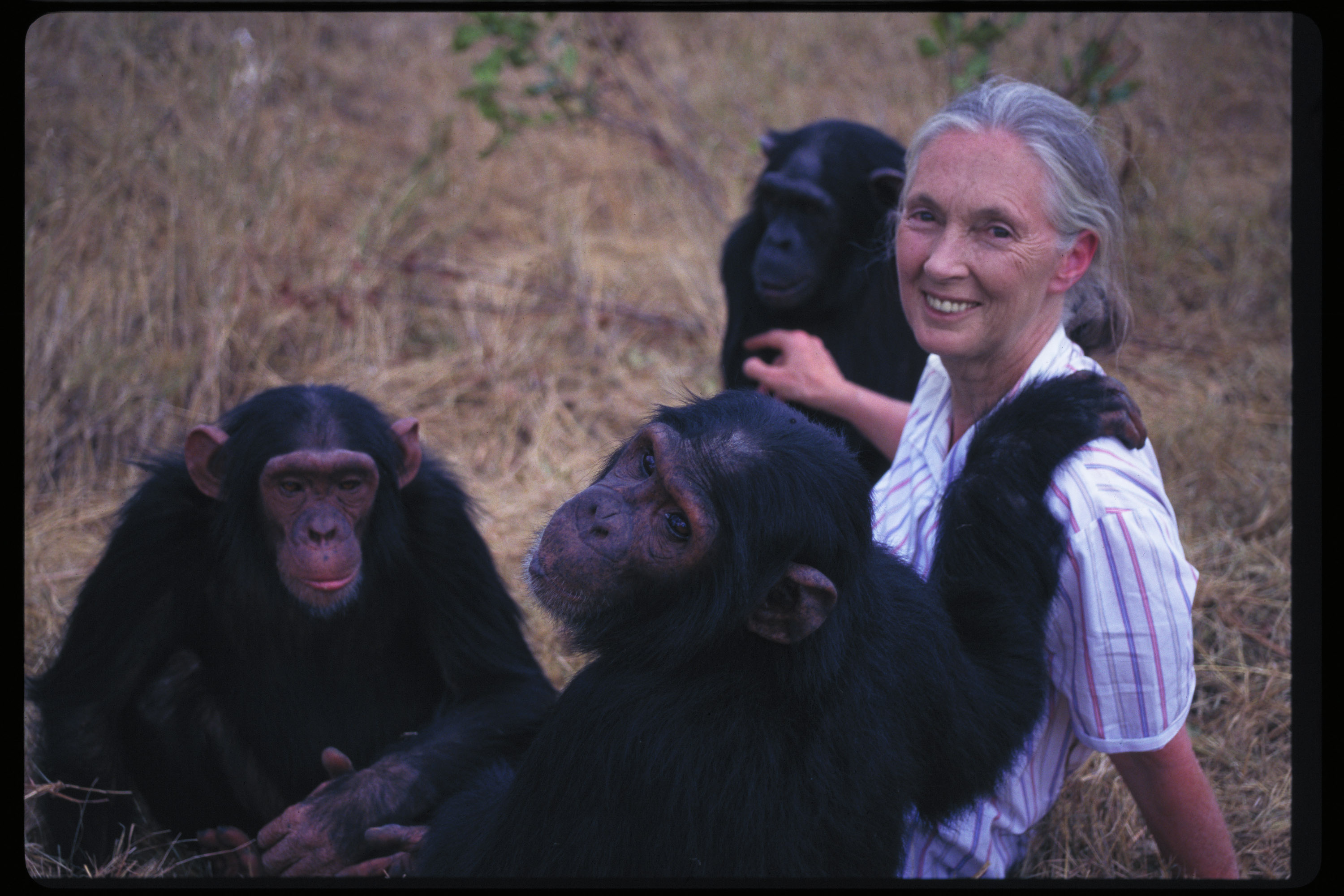 Jane Goodall | The Enchanted Manor
