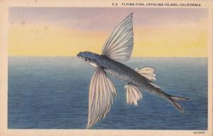 Flying fish vintage postcard