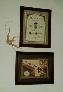 Hawaiian framed artwork