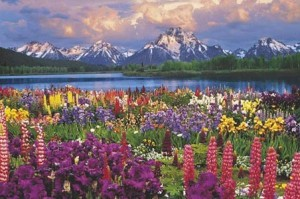 Grand Teton - wild flowers