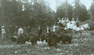 Yellowstone tourists and bears