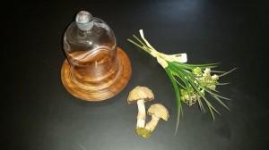 Mushrooms under glass - supplies